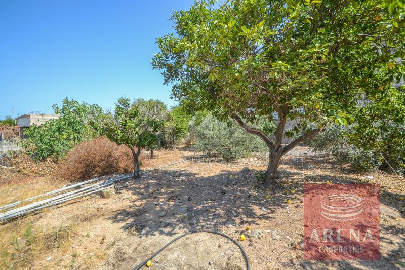 Derynia vintage property - garden