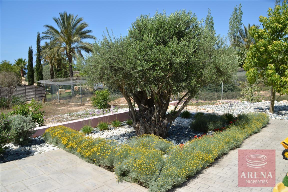 house in Paralimni - garden