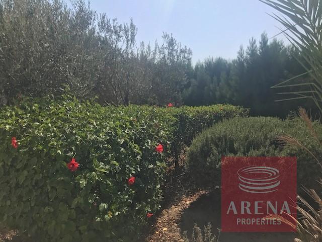 villa in softades - garden