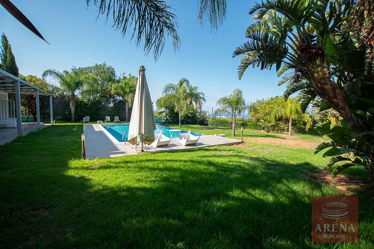 Villa in Protaras - swimming pool